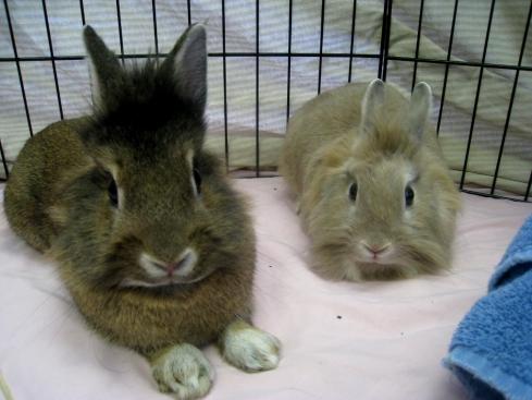 Corelli Simba & Nala