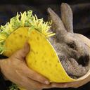 Bunny_burrito