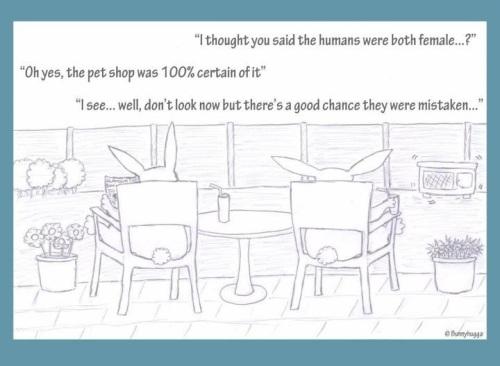 Bunny_humans